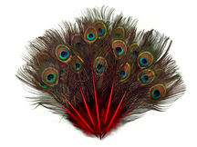 10 Pieces - Red Mini Natural Peacock Tail Body Feathers With Eyes