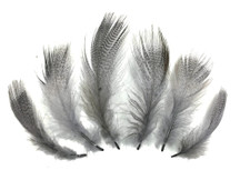 1 Pack - Platinum Grey Mallard Duck Flank Feathers 0.10 Oz.