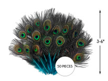 50 Pieces - Turquoise Blue Mini Natural Peacock Tail Body With Eyes Wholesale Feathers (Bulk)