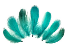 1 Pack - Peacock Green Mallard Duck Flank Plumage Feathers 0.10 Oz.