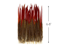 "10 Pieces - 6-8"" Natural Red Golden Pheasant Red Tip Loose Pointy Feathers"