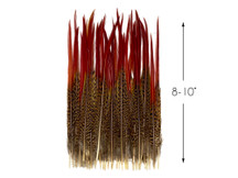 "10 Pieces - 8-10"" Natural Red Golden Pheasant Red Tip Loose Pointy Feathers"