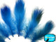 Turquoise Blue Mallard Duck Flank Feathers 0.10 Oz.