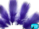 Purple Mallard Duck Flank Feathers 0.10 Oz