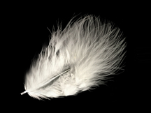 1 Pack - White Turkey Marabou Short Down Fluff Loose Feathers 0.10 Oz.