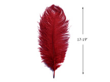 "10 Pieces - 17-19"" Burgundy Large Bleached & Dyed Ostrich Drabs Body Feathers"