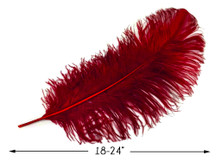 """2 Pieces - 18-24"""" Burgundy Large Prime Grade Ostrich Wing Plume Centerpiece Feathers"""