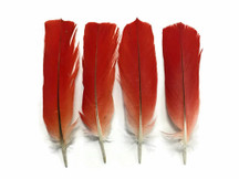 Cruelty-free natural colored small red bird feathers
