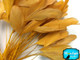 Golden yellow eyelash trim feathers