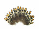 Tiny small brown and gold shiny fluffy feathers for jewelry, crafts, fly tying.