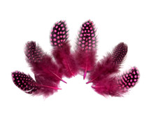 1/4 Lb - Candy Pink Guinea Hen Plumage Polka Dot Feathers Wholesale (Bulk)