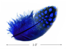 1 Pack - Royal Blue Guinea Hen Polka Dot Plumage Feathers 0.10 Oz.