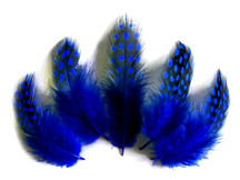 1/4 Lb - Royal Blue Guinea Hen Plumage Polka Dot Feathers Wholesale (Bulk)