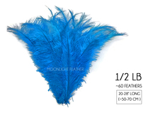 "1/2 Lb - Turquoise Blue Large Ostrich Spads Wholesale Feathers 20-28"" (Bulk)"