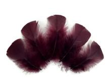 1/4 Lb - Plum Turkey T-Base Wholesale Body Plumage Feathers (Bulk)