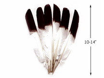 1/4 Lb - Brown Tipped Turkey Pointers 'Imitation Eagle' Wing Wholesale Feathers (Bulk)