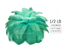 "1/2 Lb - 14-17"" Aqua Green Ostrich Large Drab Wholesale Feathers (Bulk)"