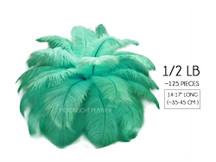"1/2 Lb - 14-17"" Aqua Green Ostrich Large Drab Wholesale Feathers (Bulk)"