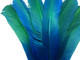 high quality blue and green ombre dyed feathers. These rounded tom wing turkey feathers are ideal for headdresses, crafts, dream catchers, and wings.