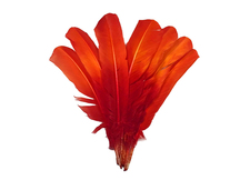 1/4 Lb - Fiery Red Ombre Turkey Rounds Tom Wing Quill Wholesale Feathers (Bulk)