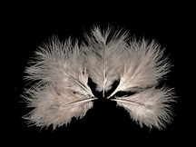 1/4 Lb - Ivory Turkey Marabou Short Down Fluffy Loose Wholesale Feathers (Bulk)