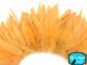 Light orange colored feathers