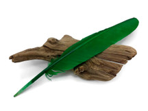 6 Pieces - Kelly Green Turkey Pointers Primary Wing Quill Large Feathers