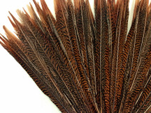 """10 Pieces - 16-18"""" Natural Golden Pheasant Tail Feathers"""
