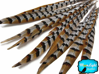 "8-10"" Natural Reeves Venery Pheasant Tail Wholesale Feathers (Bulk)"