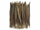 Brown zig zag long tail feathers