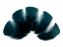 1/4 Lb - Peacock Blue Turkey T-Base Plumage Wholesale Feathers (Bulk)