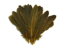 Dotted yellow quill tip feathers
