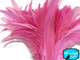 Bubblegum pink fluffy rooster feathers