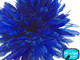 2.5 Inch Strip - Royal Blue Strung Natural Bleach And Dyed Coque Tails Feathers