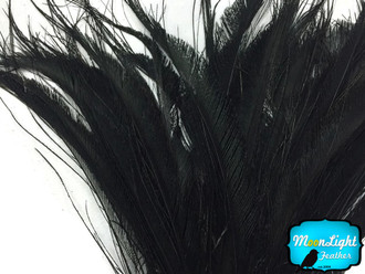Black Bleached Peacock Swords Cut Wholesale Feathers (Bulk)