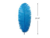 "10 Pieces - 19-24"" Turquoise Blue Ostrich Dyed Drabs Body Feathers"
