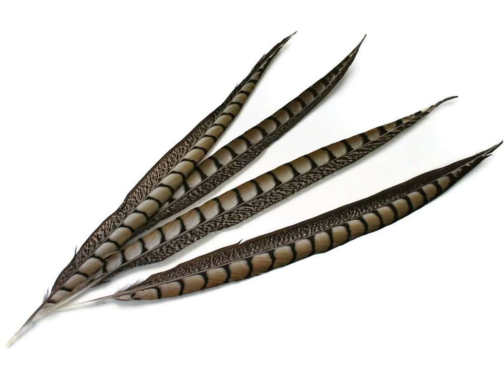 """30-35/"""" NATURAL LONG Lady Amherst Pheasant Tail Feathers 10 Pieces"""