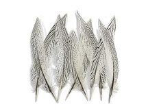 "10 Pieces - 8-10"" Natural Silver Tail Pheasant Feathers"