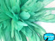 Mint Green Strung Natural Bleach And Dyed Coque Tails Wholesale Feathers (Bulk)