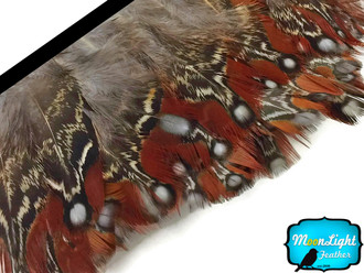 1 yard natural Temminck Tragopan rum body feather trim image 2