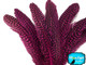 Buy Wholesale Hot Pink Guinea Primary Wing Feathers Image 2