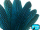 1/4 Lb - Turquoise Blue Polka Dot Guinea Fowl Wing Quills Wholesale Feathers (Bulk)