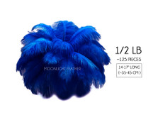 "1/2 Lb - 14-17"" Royal Blue Ostrich Large Drab Wholesale Feathers (Bulk)"