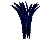 "5 Pieces - 25-30"" Navy Blue Zebra Lady Amherst Pheasant Tail Super Long Feathers"