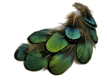 1/8 Lb. - Iridescent Green Bronze Lady Amherst Pheasant Plumage Wholesale Feathers (Bulk)