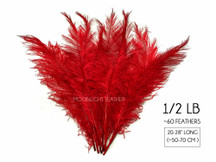 """1/2 Lb - Red Large Ostrich Spads Wholesale Feathers 20-28"""" (Bulk) Swa"""