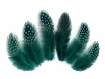 1/4 Lb - Peacock Blue Guinea Hen Plumage Polka Dot Feathers Wholesale (Bulk)