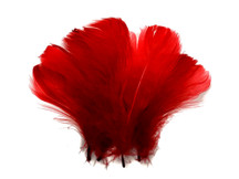 "1/4 Lb - 2-3"" Red Goose Coquille Loose Wholesale Feathers (Bulk)"