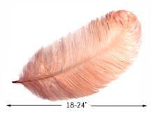 "10 Pieces - 18-24"" Champagne Large Prime Grade Ostrich Wing Plume Centerpiece Feathers"