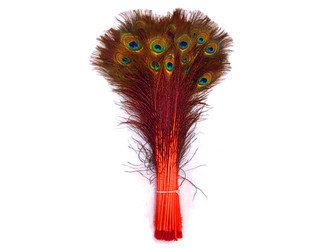 """20-25"""" Orange Dyed Over Natural Peacock Tail Eye Wholesale Feathers (Bulk)"""